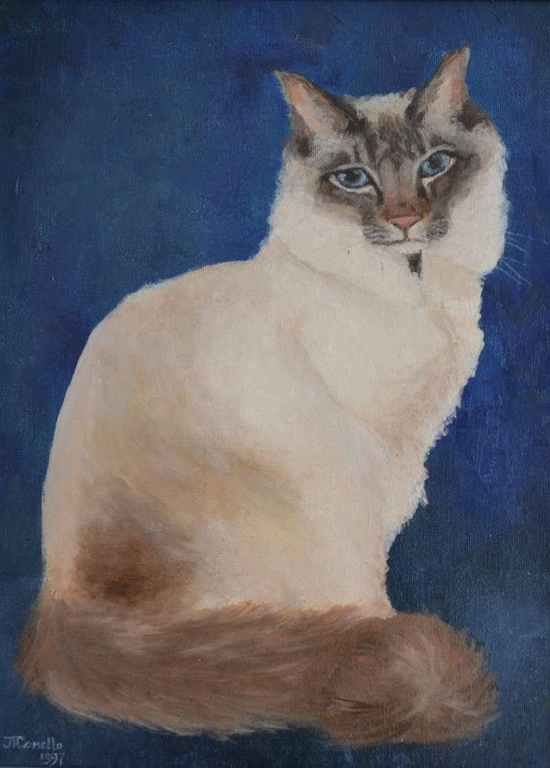 1997, Cyrus, voorkant, 40x50, olieverf, kattenportret, J. Comello