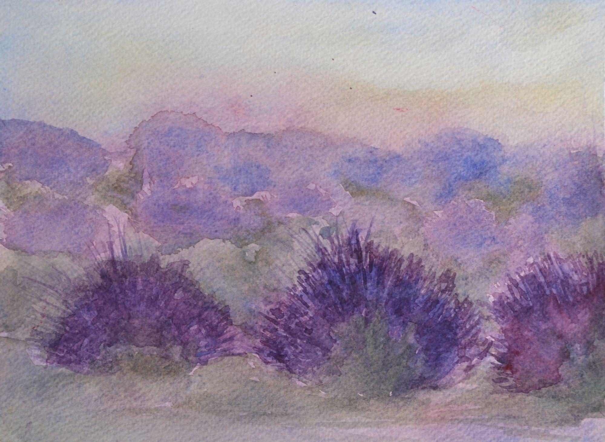 2013 Lavendelvelden
