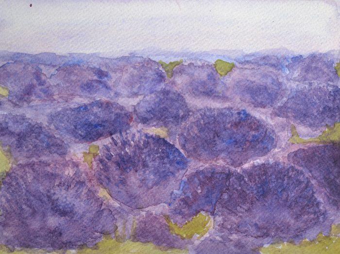 2013 Lavendelvelden II