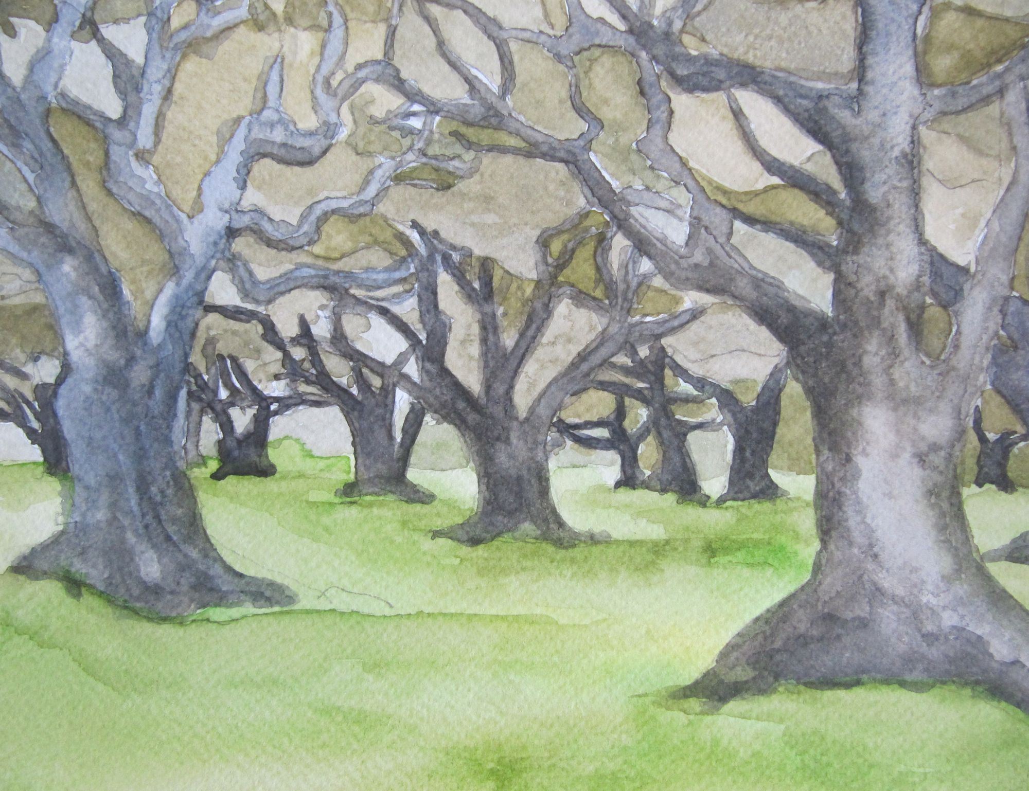 olijfbomen II